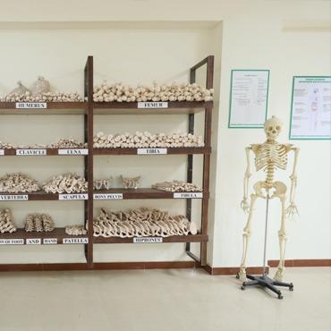 anatomy_museum_1
